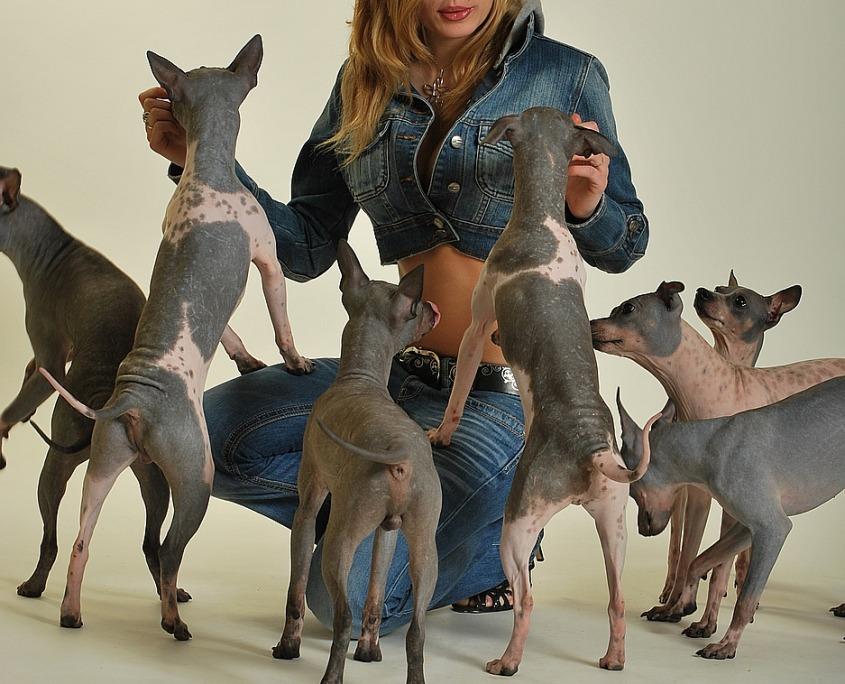 focení se zvířátky se psy